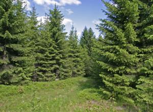 Skog kjøler kloden
