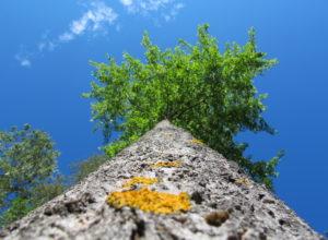 Rødlista og skogen – tilsvar til Artsdatabanken