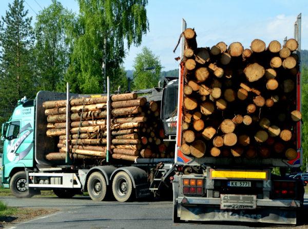 Tømmerbil m/lass