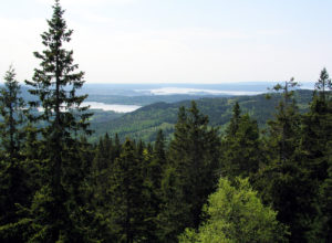 Deler av skogen kan gå til biodrivstoff