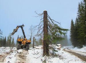 På jobb for et bærekraftig skogbruk