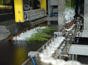 Startet produksjon av voksede planter