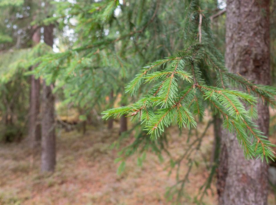 Kriser og muligheter – flaskehalser og skogfond