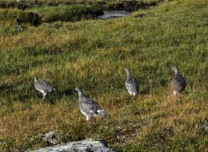 Gode utsikter for fuglejakta i Sør-Norge