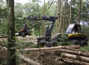 Hva avgjør om skogeierne hogger?