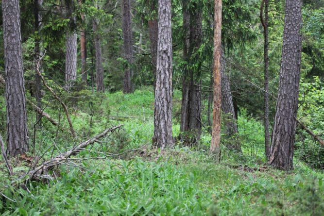 Ny rødliste for naturtyper – godt verktøy, men skuffende svake ekspertvurderinger