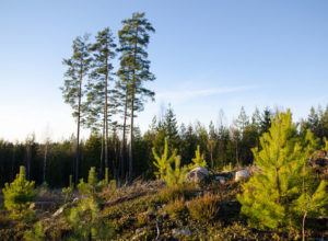 Klimagassregnskap for skog og arealbruk