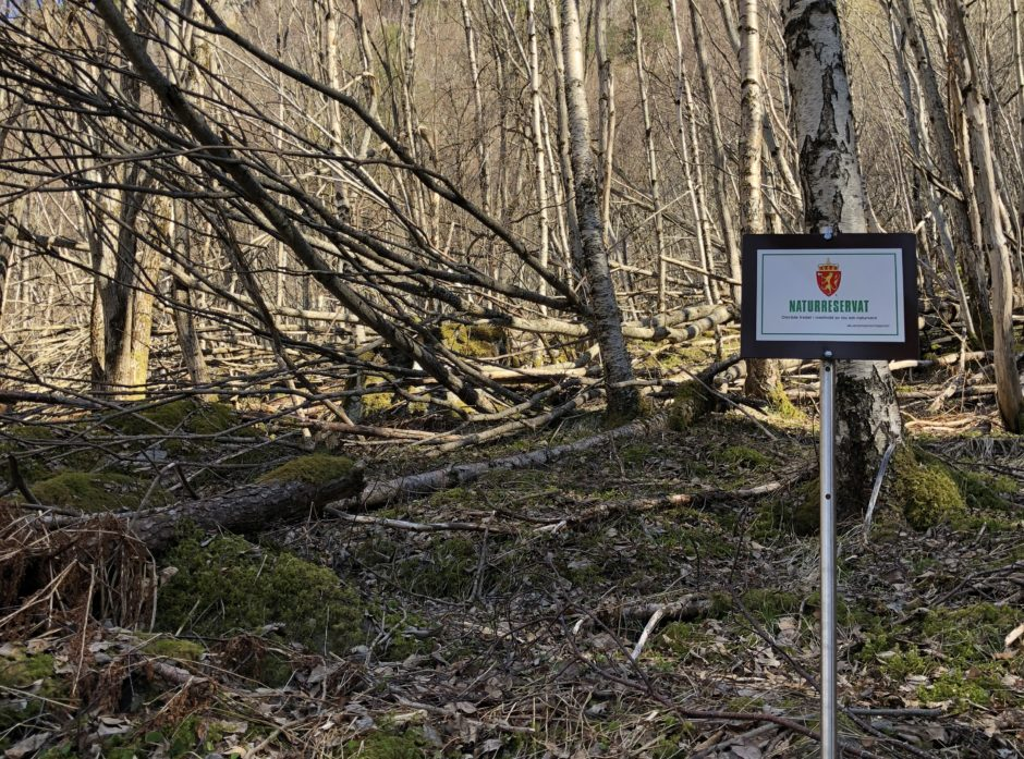 Eiendomsrett til skog er økonomi og miljøansvar