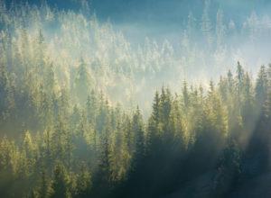 Bruk av skog er et trumfkort i klimakampen