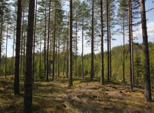 Samlet om strategi for produksjonsforskning i skogbruket