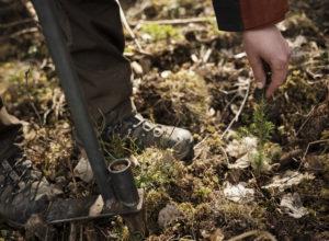 Regjeringen overser den enkleste formen for økt karbonopptak – skogplanting