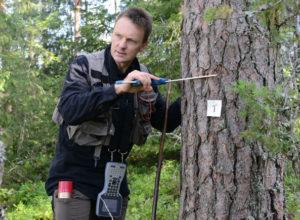 Norges skogvolum tredoblet på 100 år