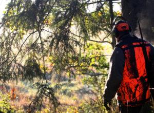 Innovasjon Norge og Skogkurs inviterer til workshop/fagdag for jakt og jaktopplevelser