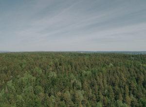 Mindre skogskader enn fryktet