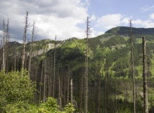 Skogen i Europa dør