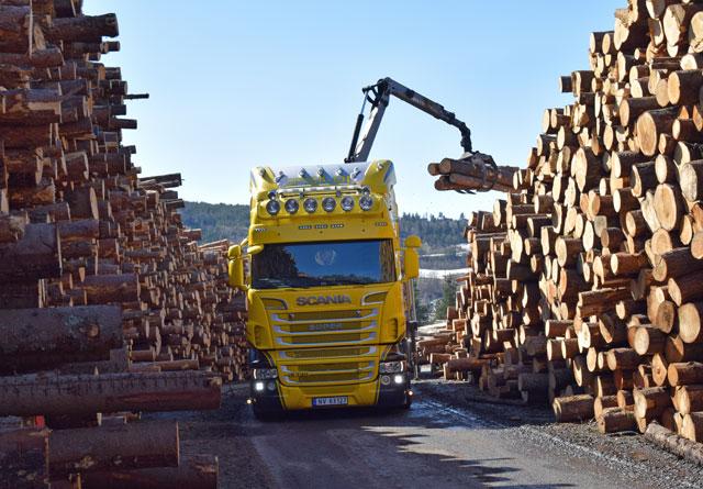 Rekord i tømmervolum og planting i AT Skog