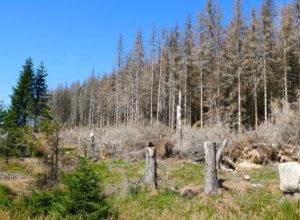 Enorme skader på tysk skog