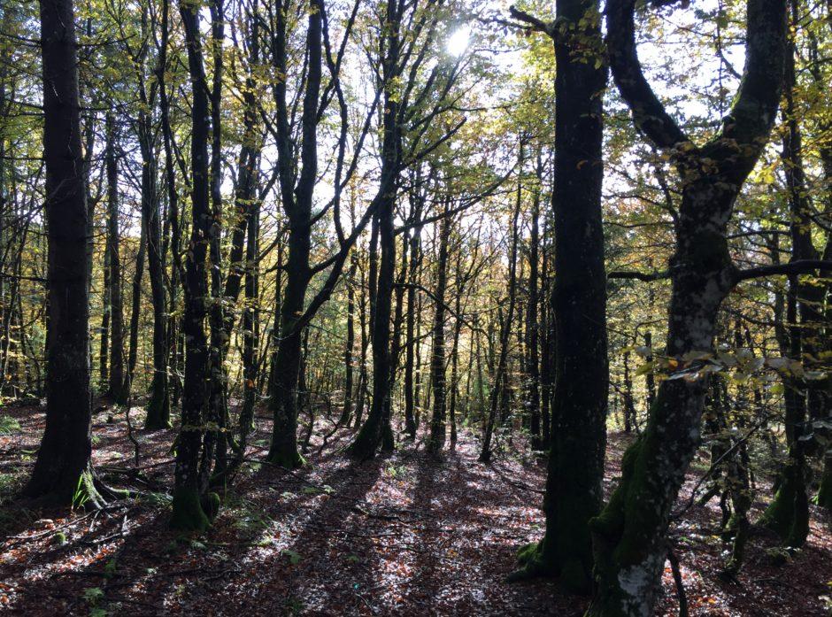 Korpen og Sagkollen og 29 andre skogområder vernes frivillig