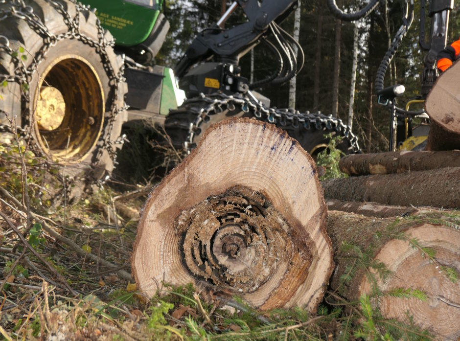 Råte i skog er en kostbar affære. Nå ønsker PRECISION å lære mer om utfordringen, og hva vi kan gjøre med det. Foto: Roar Ree Kirkevold